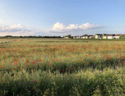 Blumen in Neulußheim