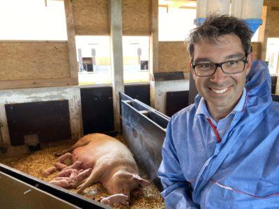 Dr. Andre Baumann in einem Schweinestall mit freier Abferkelung, der ohne Kastenstand auskommt.