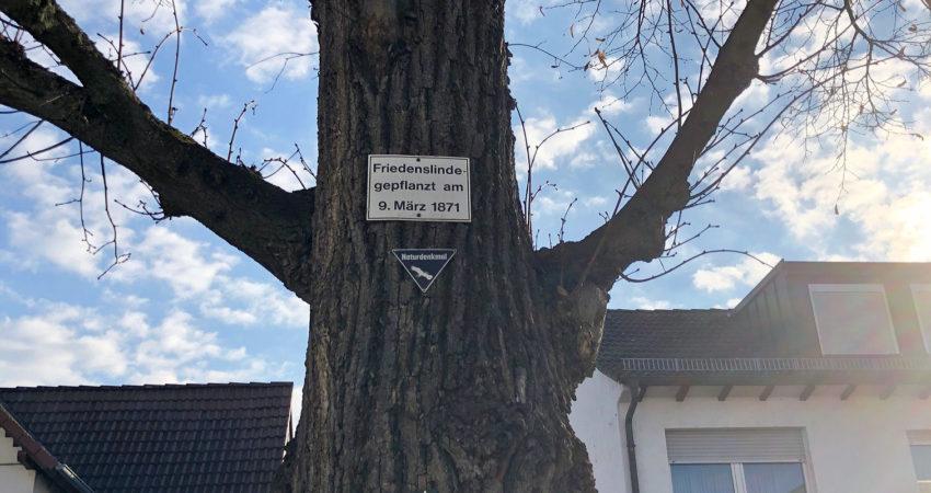 150 Jahre Neulußheimer Friedenslinde, 9. März 2021